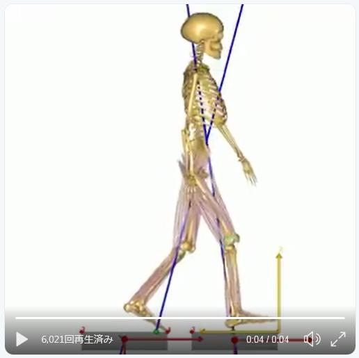 ガイコツが歩く時の荷重移動はこんな感じ・・・